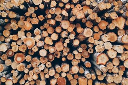 Drewno, czyli magiczny surowiec - do czego jest wykorzystywane?